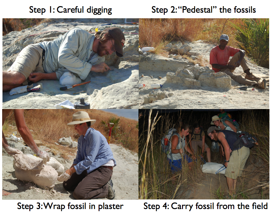 Digging up fossils in Madagascar
