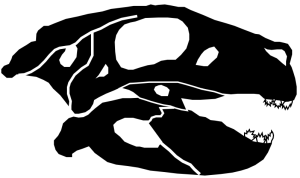 Simosuchus clarki skull