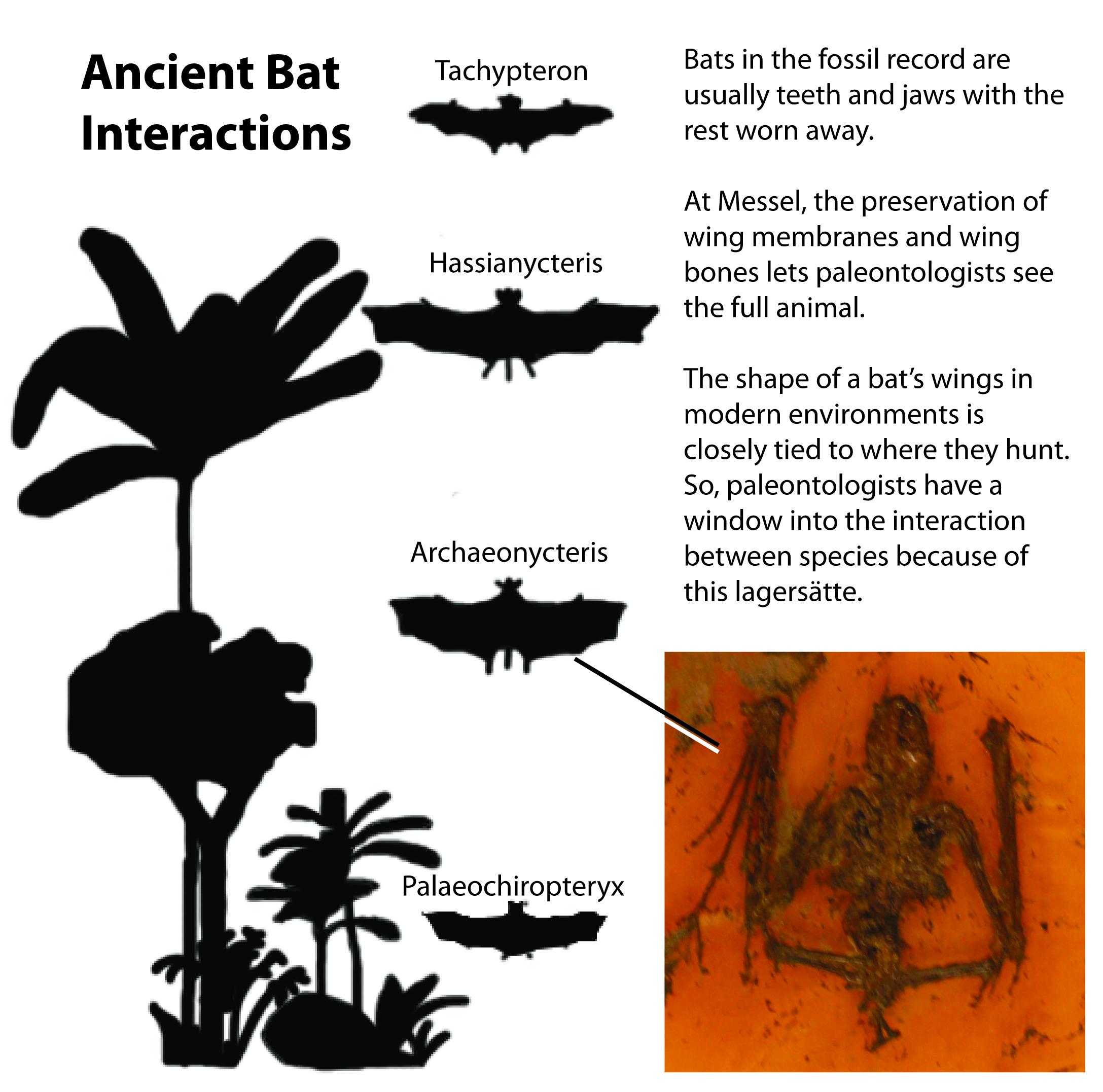 Bat ecology