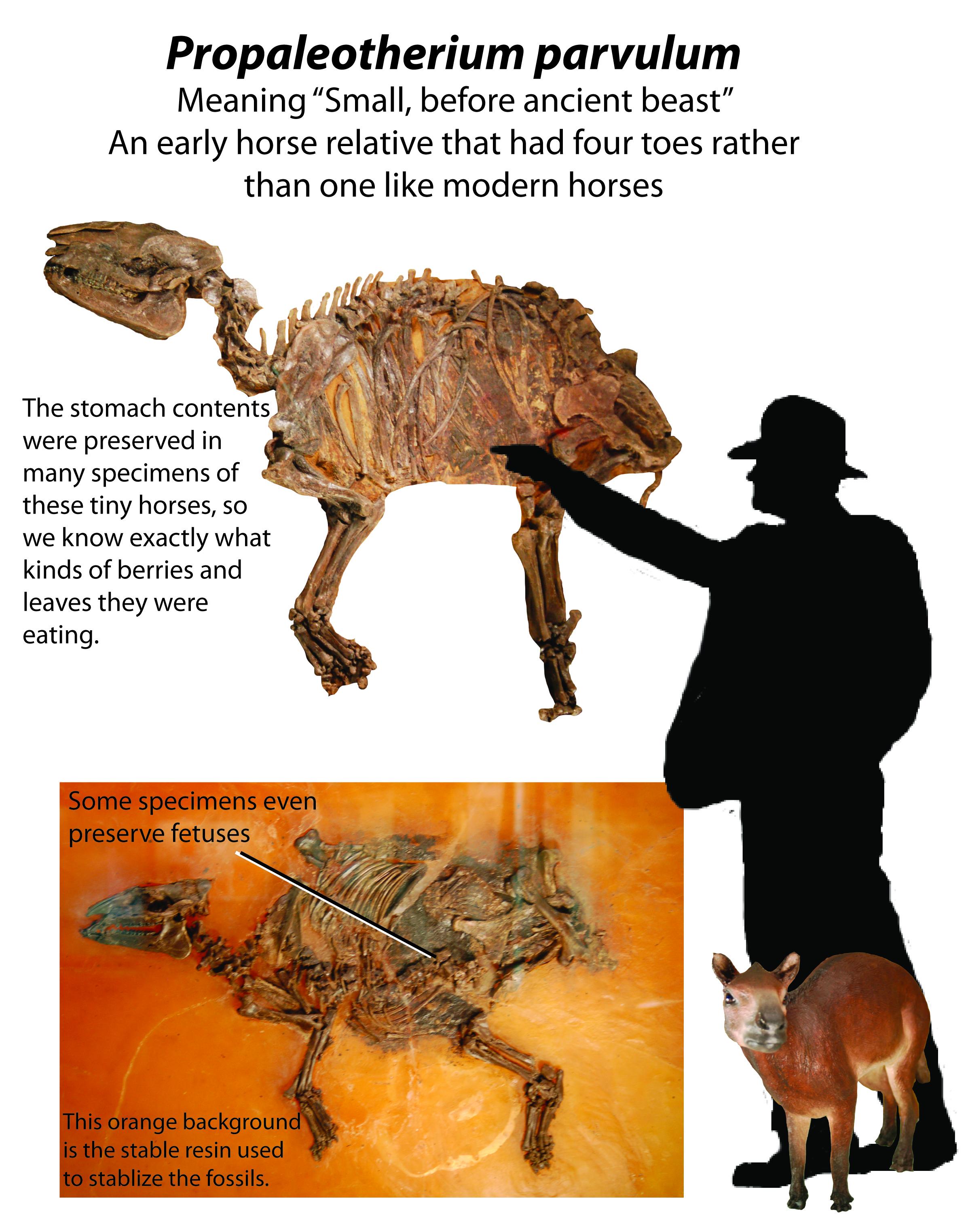 Propaleotherium