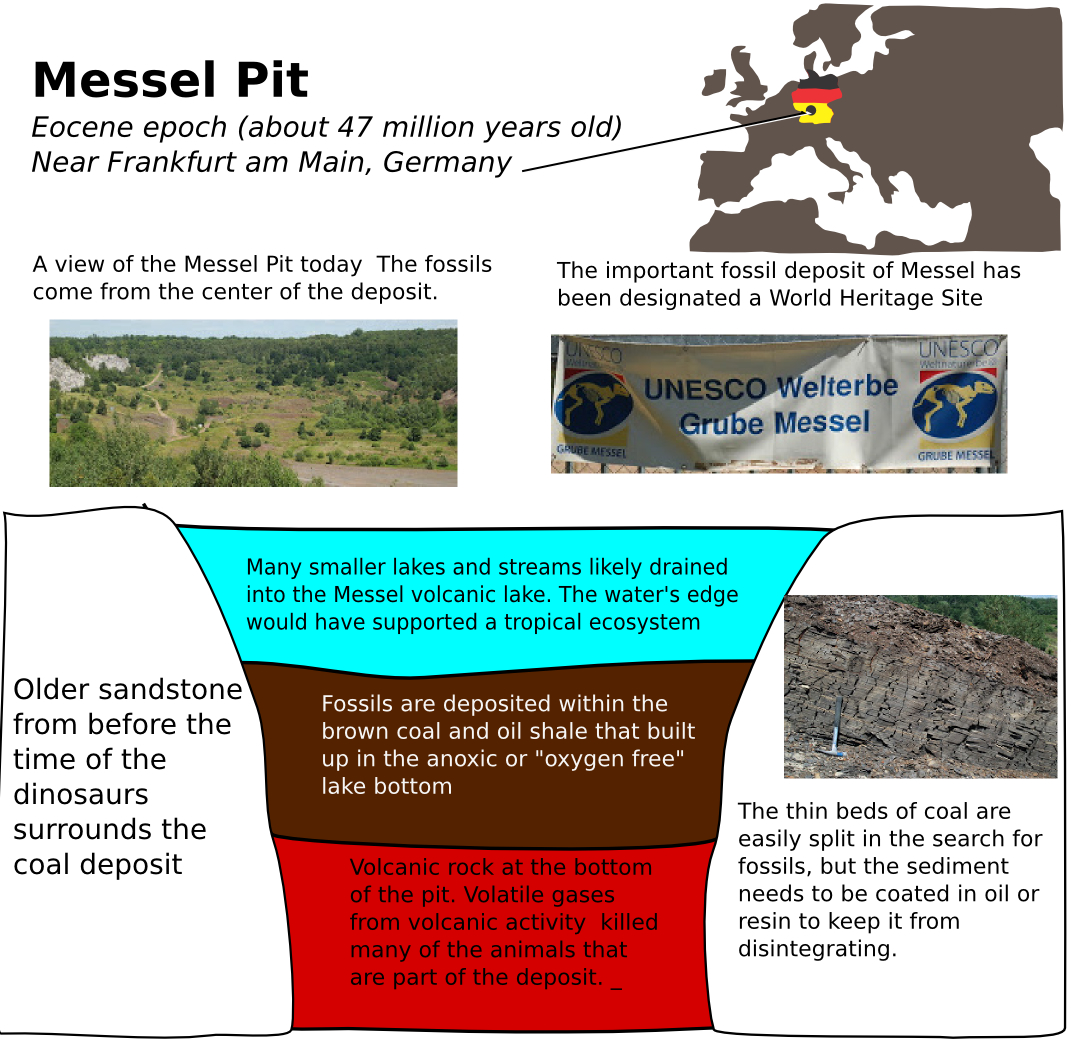 Introduction to Messel