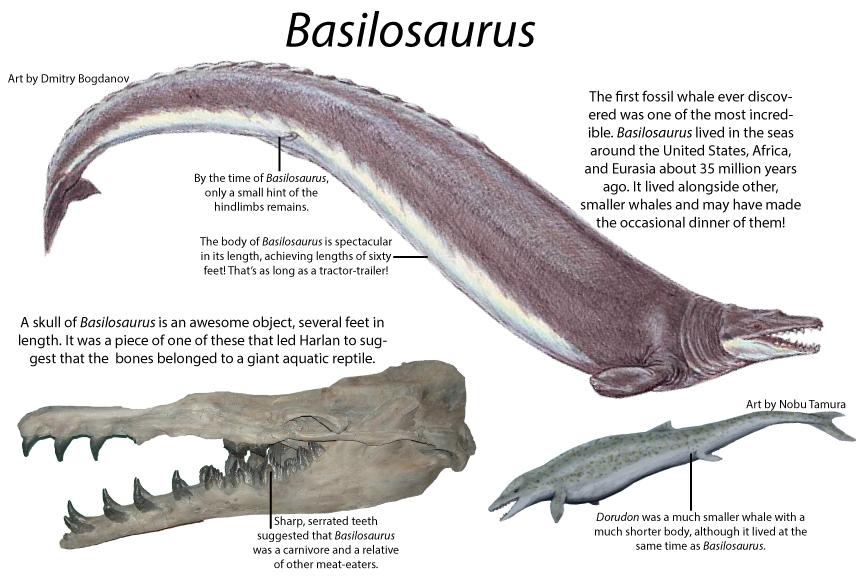 BasilosaurusWeb