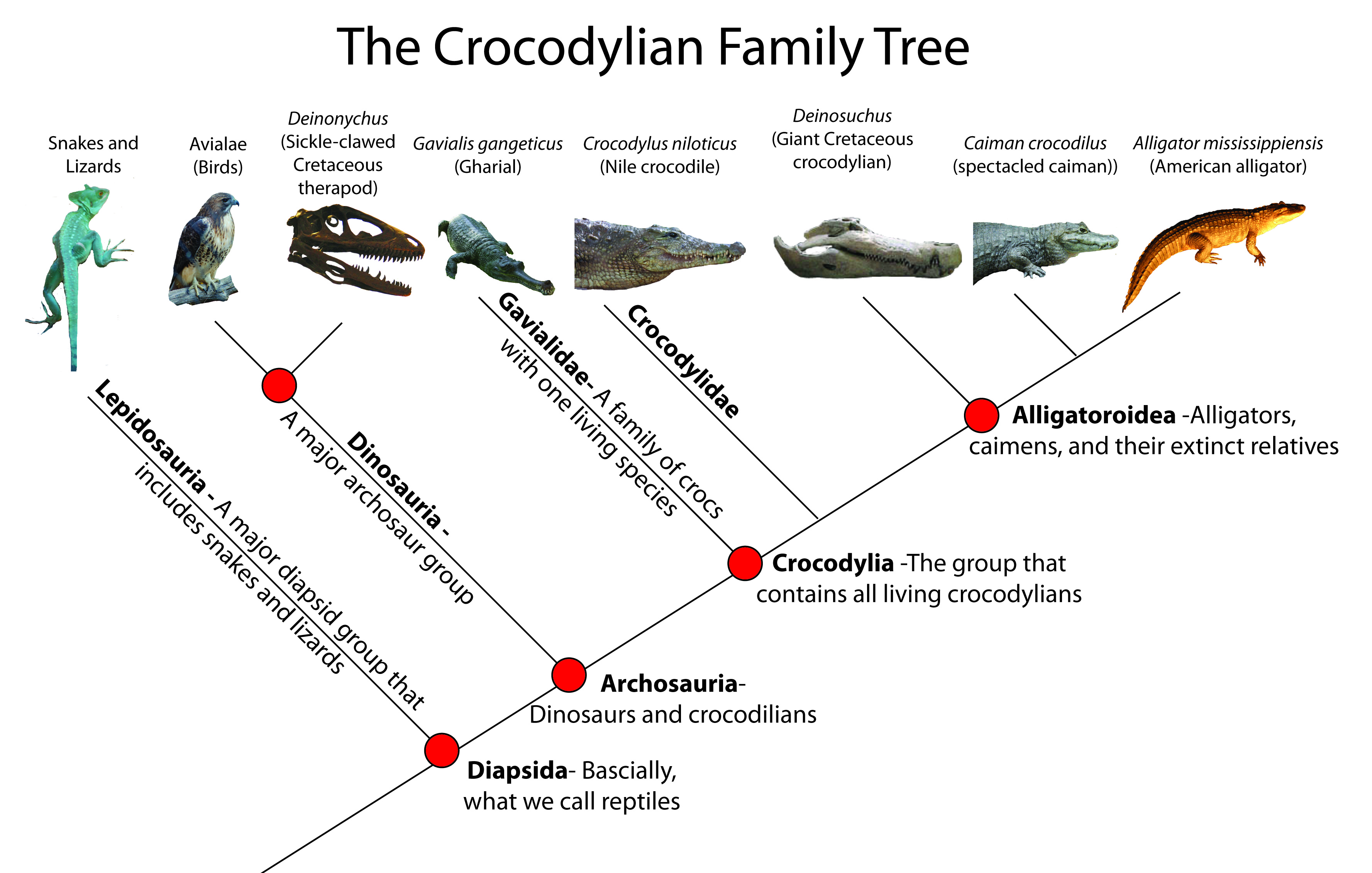 Crocodylia Family Tree