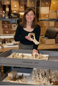 Dr. Maureen O'Leary, associate professor of Anatomical Sciences at Stony Brook University