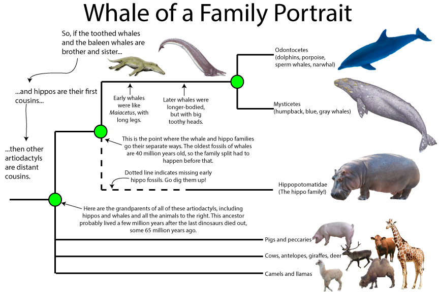 Episode 7 Field Guide: Walking through Whale Evolution - Past Time Paleo