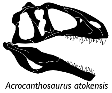 Acrocanthosaurus skull small
