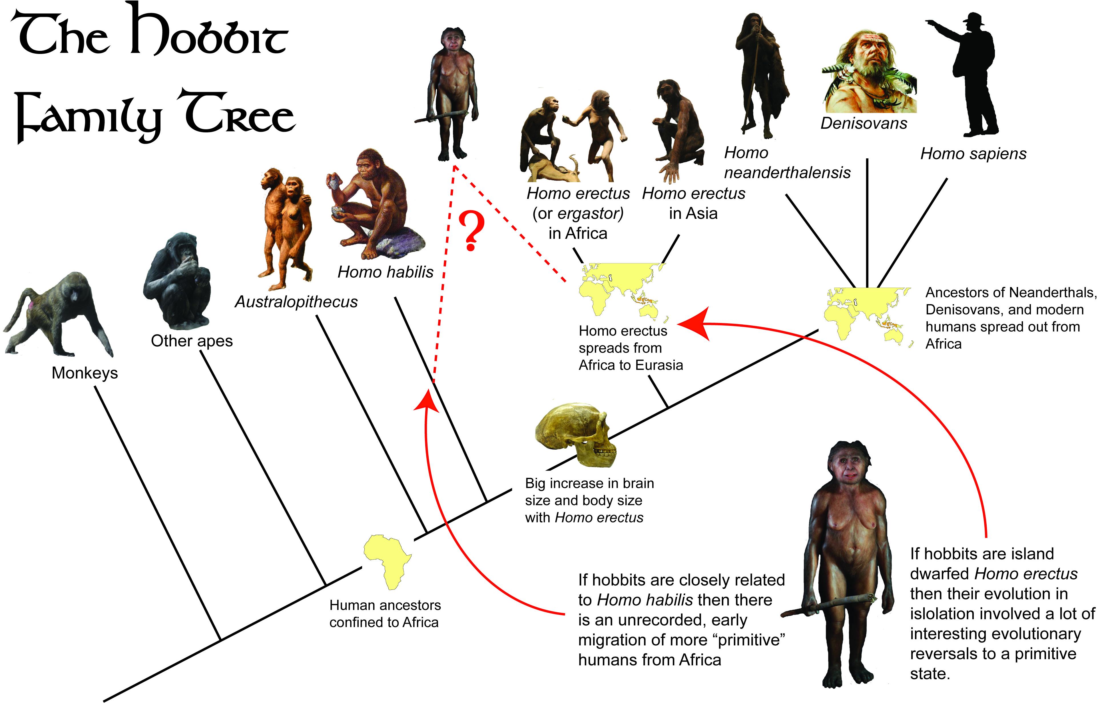The Hobbit Family Tree