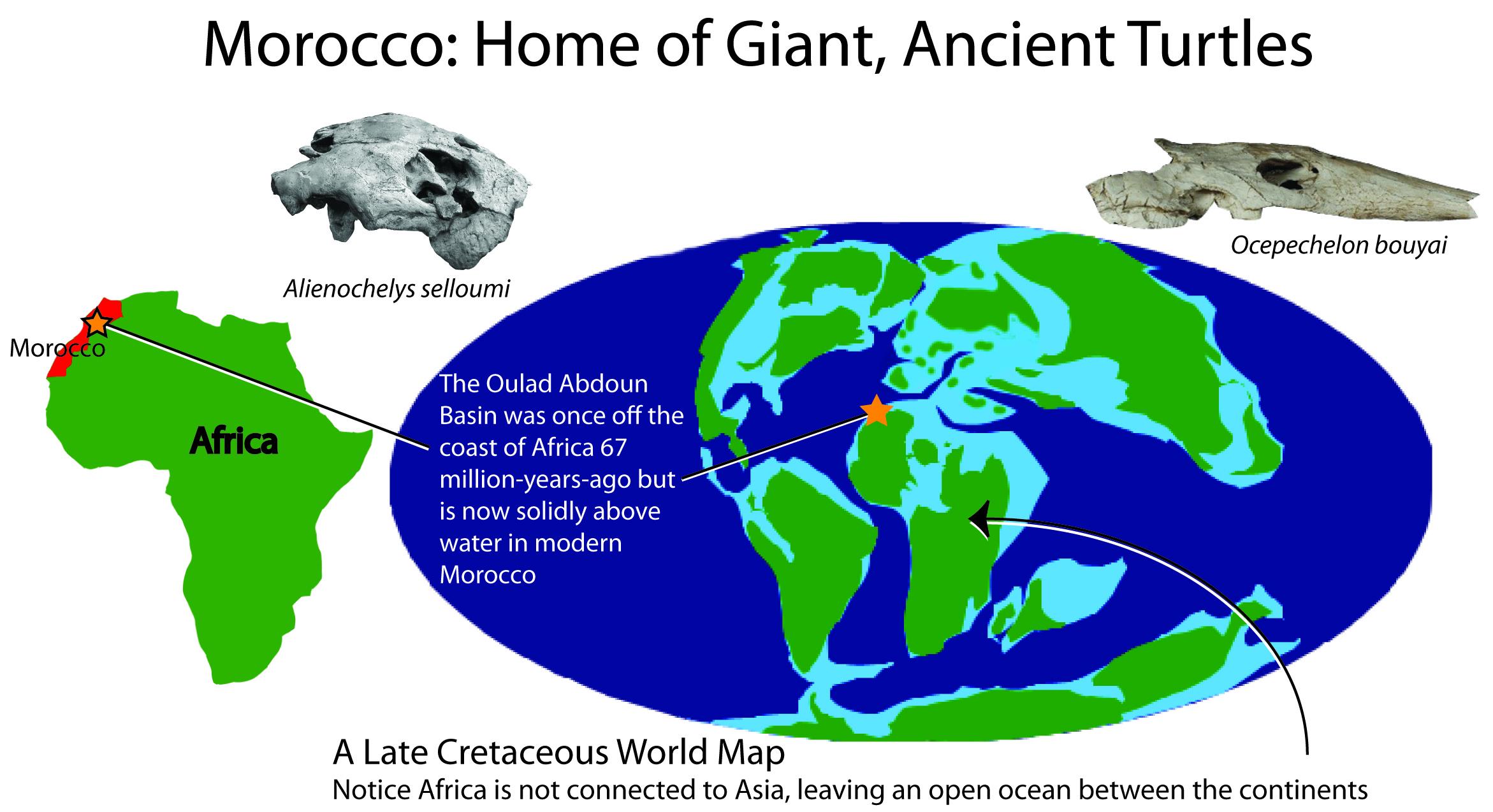 Late Cretaceous Morocco