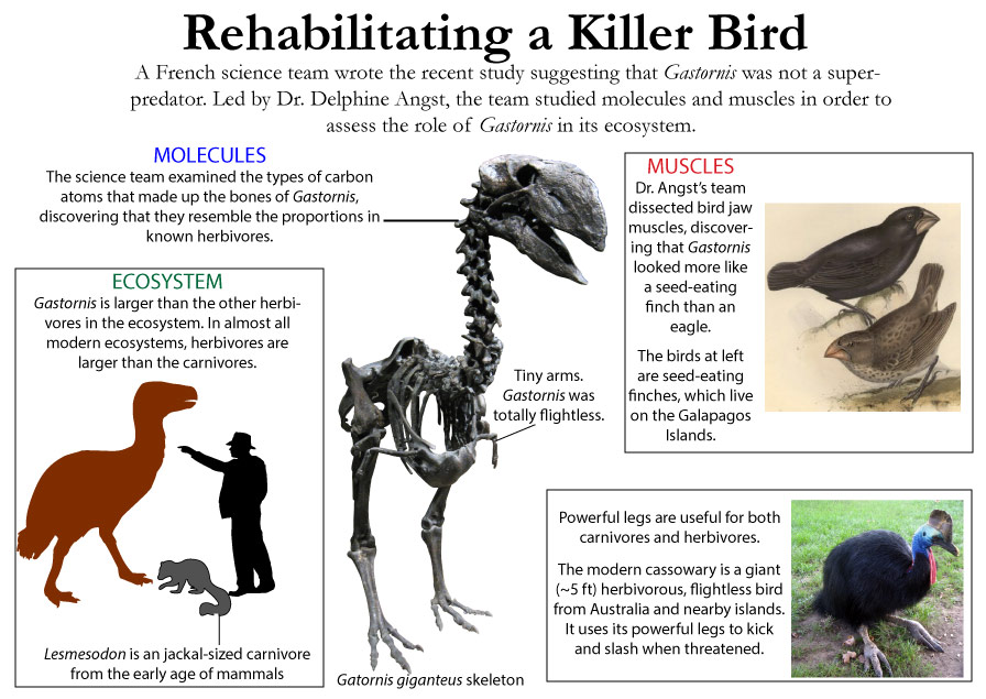 Gastornis facts