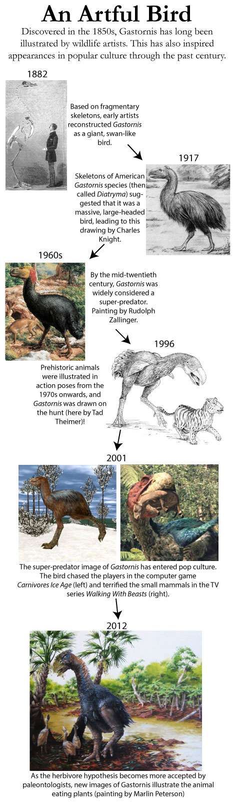 Gastornis Reconstructions and diet through history