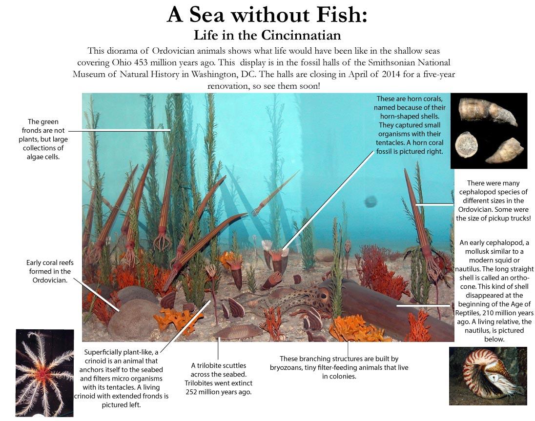 Animals from Cincinnatian Ohio, including trilobites, eurypterids, orthocones, bryozoans, algae, brachiopods, and crinoids.