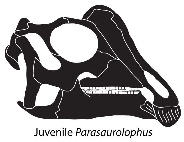 Dinosaur Joe Juvenile Baby Parasaurolophus