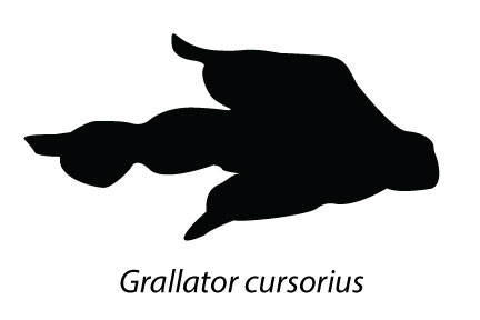 An ichnotaxon (animal name based on a trace fossil) named Grallator, probably the footprint of a carnivorous dinosaur.