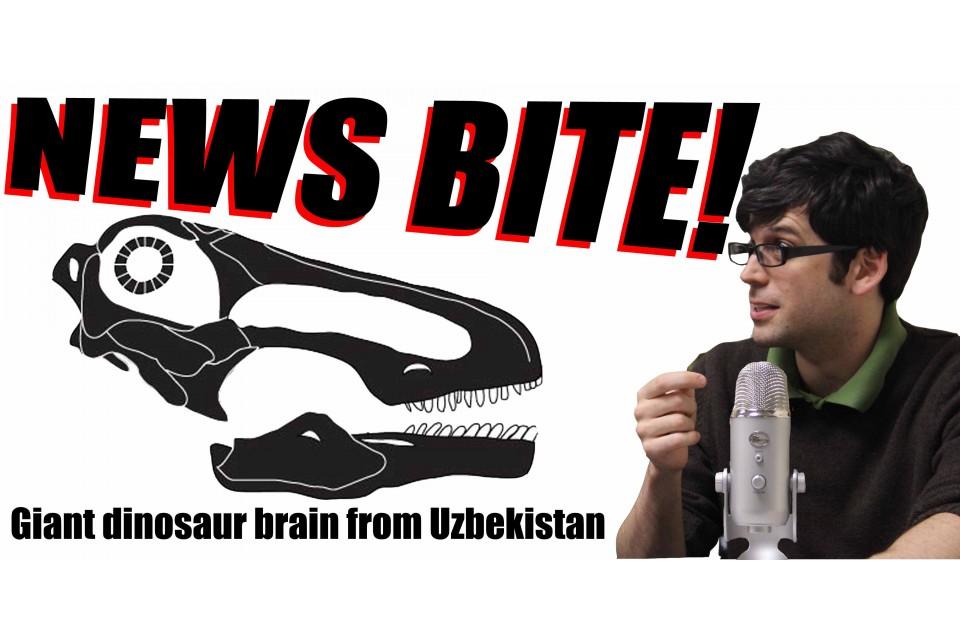 News Bite: Giant dinosaur brain from Uzbekistan!