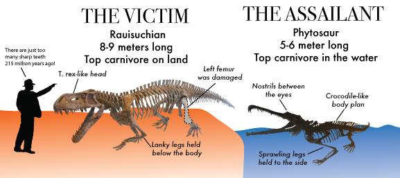 Rauisuchian-and-Phytosaur