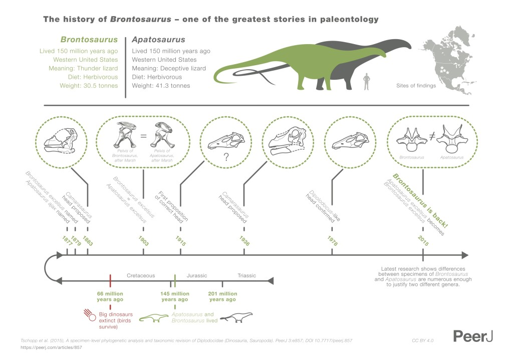 Brontosaurus_infographic_NoText_HRes