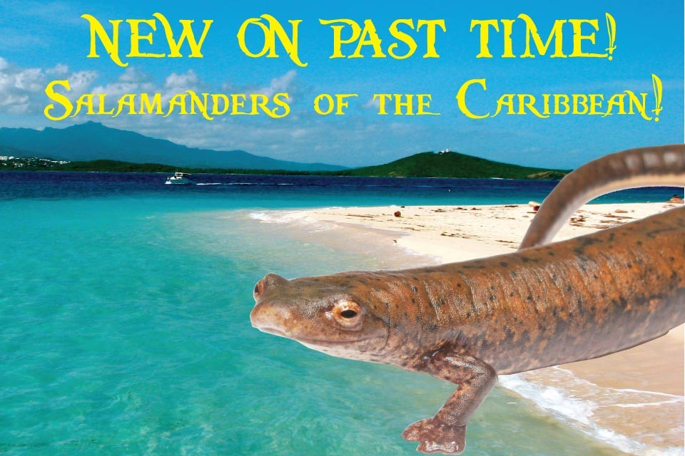 News Bite: Salamanders of the Caribbean!