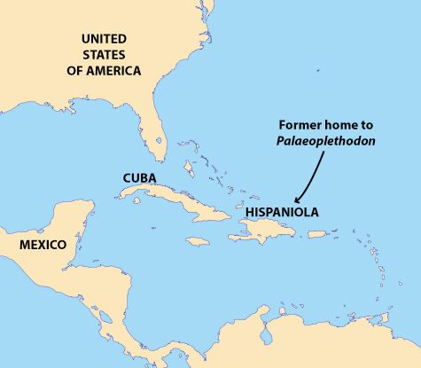 A map modified from Wikimedia indicating the location of Hispaniola, the island on which Palaeoplethodon was discovered. Hispaniola is today the location of the countries of Haiti and the Dominican Republic.