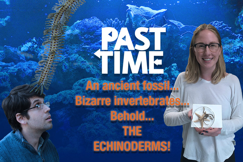 Episode 23: Meet the Echinoderms! Adventures with Ancient Sea Stars!