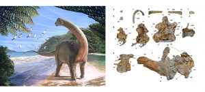 Painted reconstruction of Mansourasaurus and original fossil material