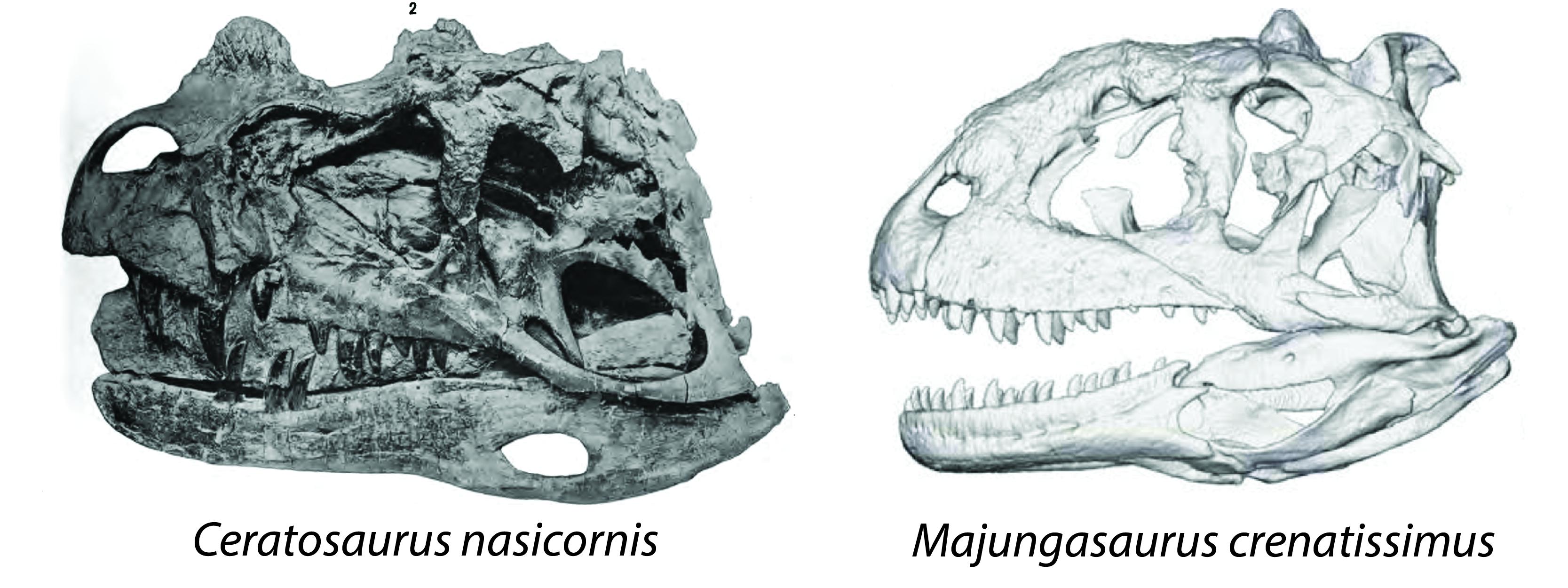 Episode 25 – Ceratosaurs: Story of a Predatory Dinosaur Dynasty!