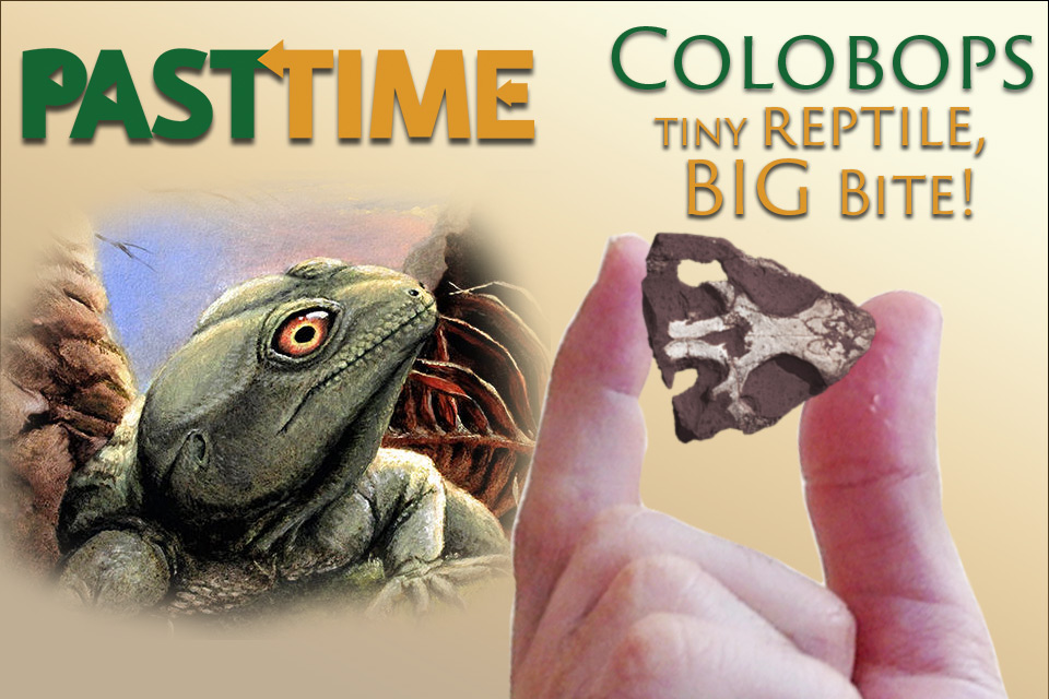 Episode 26 – Colobops: the tiny reptile with a big bite!