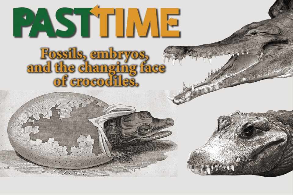 Episode 32 – The Changing Face of Crocodiles